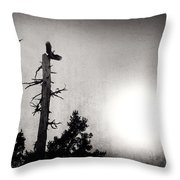 Eagles And Old Tree In Sunset Silhouette Throw Pillow