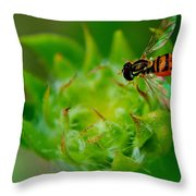 Early Arrival Throw Pillow