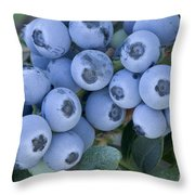 Early Blue Blueberries Throw Pillow