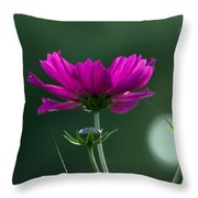 Early Dawns Light On Fall Flowers 03 Throw Pillow