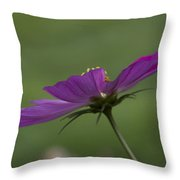 Early Dawns Light On Fall Flowers 04 Throw Pillow