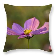 Early Dawns Light On Fall Flowers 05 Throw Pillow