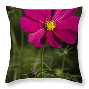 Early Dawns Light On Fall Flowers V 03 Throw Pillow