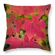 Early Fall Of Norway Maple Throw Pillow