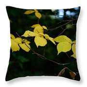 Early Fall Of Wych Elm Throw Pillow