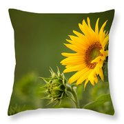 Early Morning Sunflowers Throw Pillow
