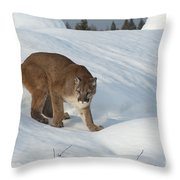 Early Morning Survey Throw Pillow