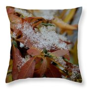 Early Snow On Rhododendron Throw Pillow