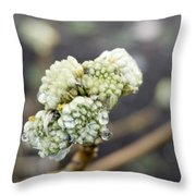 Early Spring 2 Throw Pillow