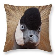 East African Crowned Crane 6 Throw Pillow
