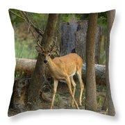 East Texas Whitetail  Throw Pillow