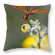 Eastern Amberwing Dragonfly Throw Pillow