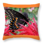 Eastern Black Swallowtail And Bee Balm Throw Pillow