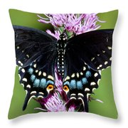 Eastern Black Swallowtail Butterfly Throw Pillow