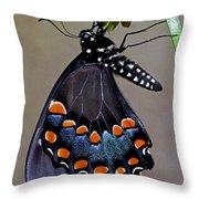 Eastern Black Swallowtail Throw Pillow