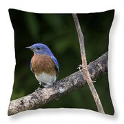 Eastern Blue Delight Throw Pillow