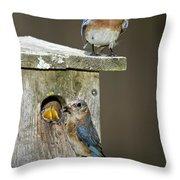 Eastern Bluebird Family Throw Pillow