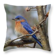 Eastern Bluebird In A Pear Tree Throw Pillow