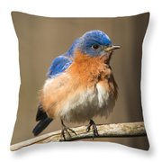 Eastern Bluebird Male Ruffled Throw Pillow