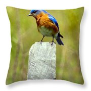 Eastern Bluebird Pose Throw Pillow