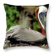Eastern Brown Pelican Throw Pillow