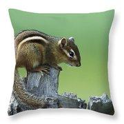 Eastern Chipmunk On Snag North America Throw Pillow