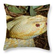 Eastern Diamondback Rattlesnake Albino Throw Pillow