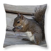 Eastern Gray Squirrel-4 Throw Pillow