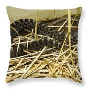 Eastern Massasauga Rattlesnake Sistrurus Catenatus Poster Look Throw Pillow