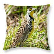 Eastern Meadowlark Throw Pillow