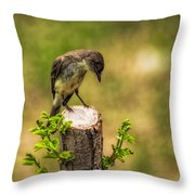 Eastern Phoebe Throw Pillow