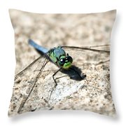 Eastern Pondhawk Throw Pillow