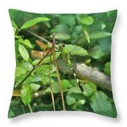 Eastern Pondhawk Female Dragonfly - Erythemis Simplicicollis - On Pine Needles Throw Pillow