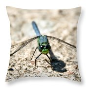 Eastern Pondhawk Front Throw Pillow