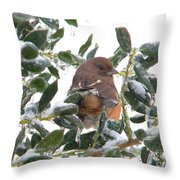 Eastern Rufous-sided Towhee Throw Pillow