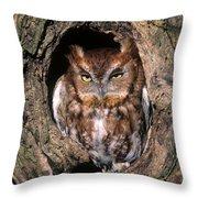 Eastern Screech Owl - Fs000810 Throw Pillow