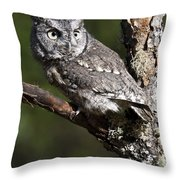 Eastern Screech-owl Otus Asio Throw Pillow