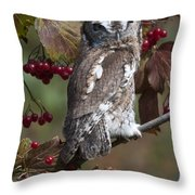 Eastern Screech Owl Red And Gray Phases Throw Pillow