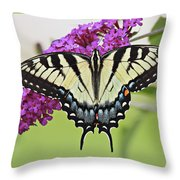 Eastern Swallowtail  Throw Pillow