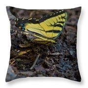 Eastern Swallowtail Throw Pillow