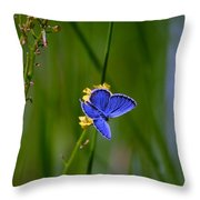 Eastern Tail Blue Butterfly Throw Pillow