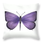 Eastern Tailed Blue Butterfly Throw Pillow by Anonymous