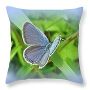 Eastern-tailed Blue Butterfly - Cupido Comyntas Throw Pillow