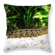 Eastern Tent Caterpillar Throw Pillow