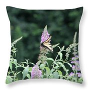 Eastern Tiger Swallowtail Butterfly -  Featured In Wildlife Group Throw Pillow