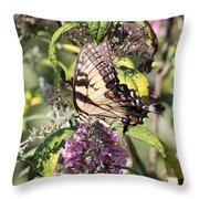 Eastern Tiger Swallowtail - Butterfly Throw Pillow