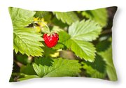 Eat Me Throw Pillow