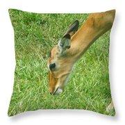 Eating Impala  Throw Pillow