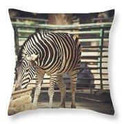 Eating Zebra Throw Pillow