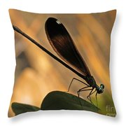Ebony Damselfly Throw Pillow